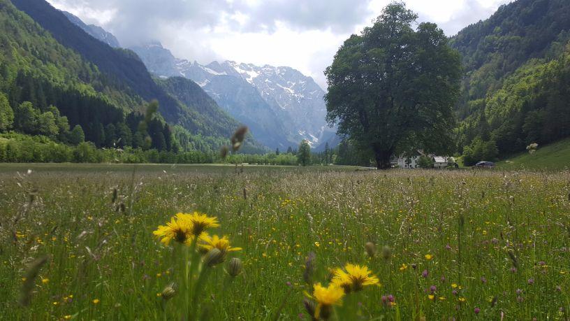 Wildflowers on the meadow. Author: Ivana Bole
