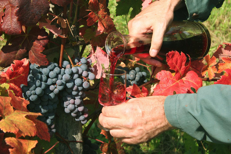 First wine. Source: Shutterstock